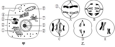 (16分)下图甲是某高等动物细胞亚显微结构示意图
