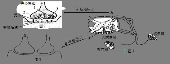 突触的结构示意图